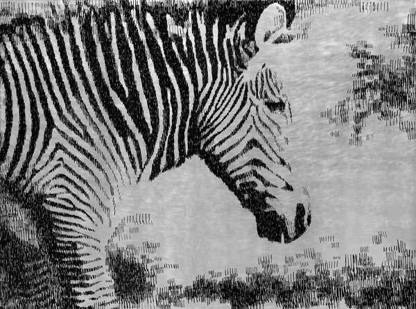 Zebra, 2010, industrijska boja na aluminijumu, 92x124cm